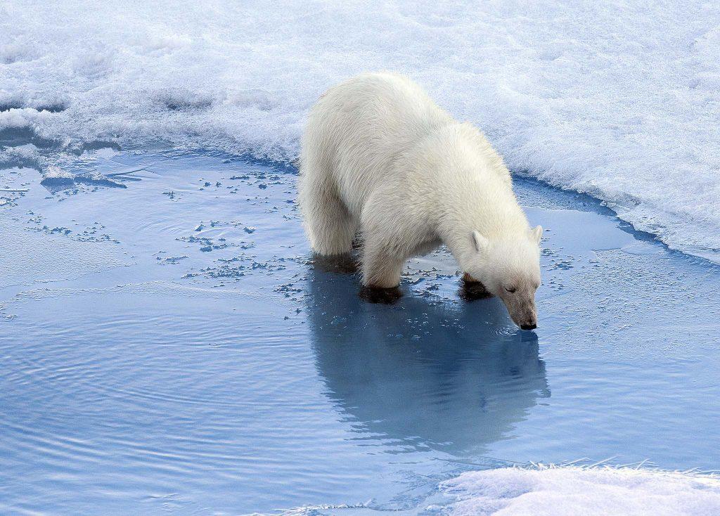 Climate Change Artic Ice Melting | Castria Design